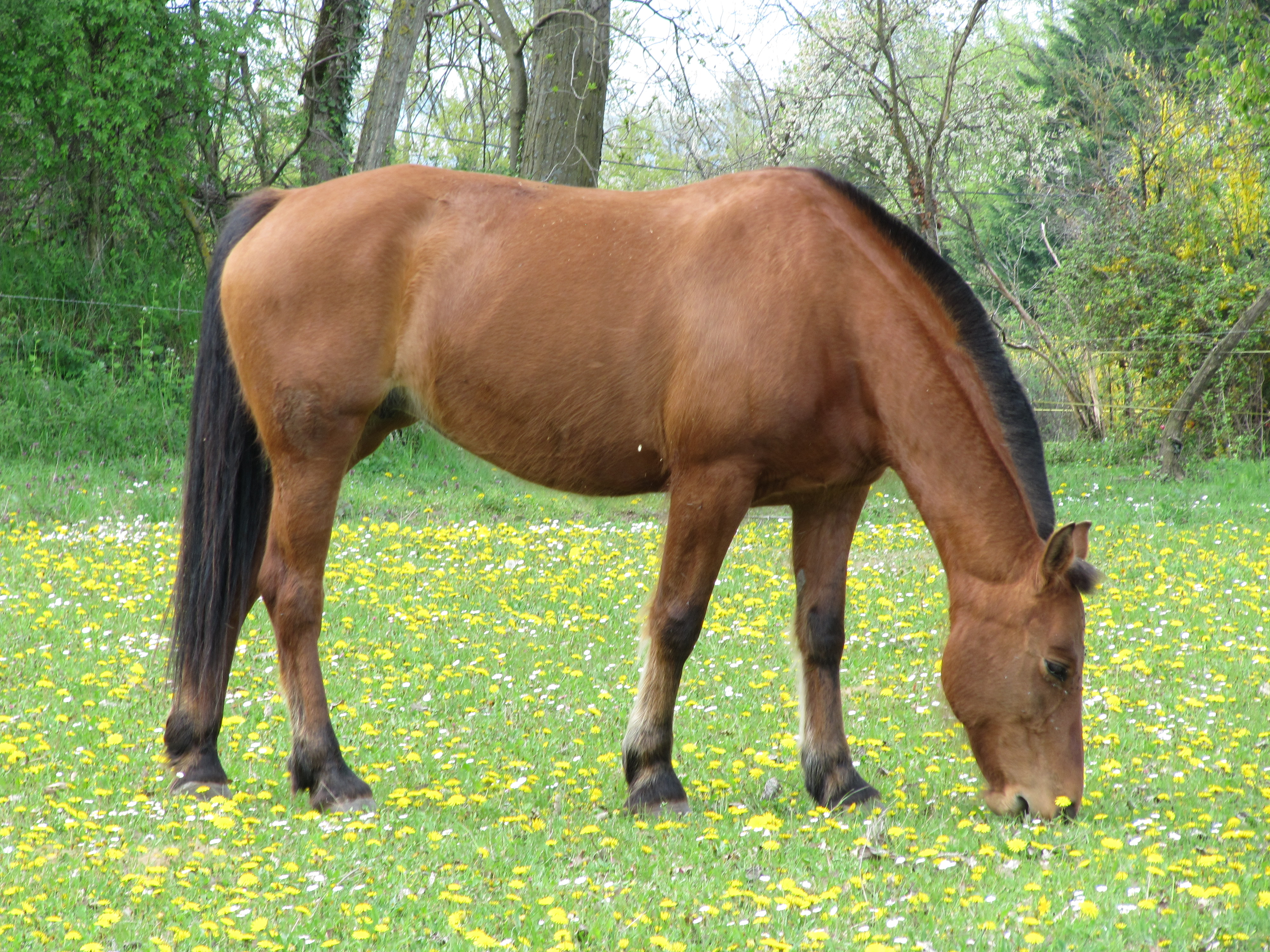 Horse Photos Gallery 100 Free Horse Wallpapers Big
